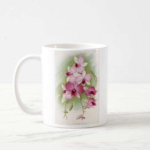 Orchid - Dendrobium Phalaenopsis Coffee Mug