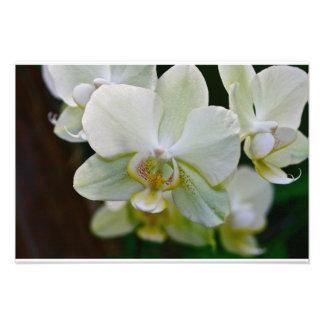 Orchid Fine Art Print #9106 Photo
