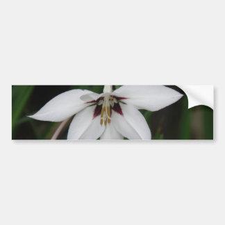 Orchid Flower Bumper Sticker Car Bumper Sticker