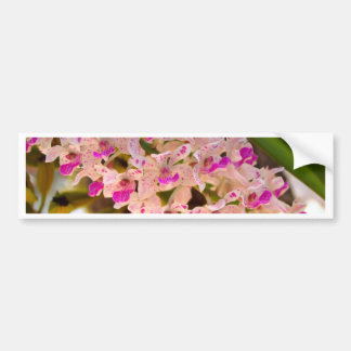 Orchid Flower Bumper Sticker