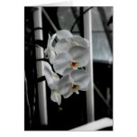 Orchid Flower Cards