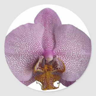 Orchid flower classic round sticker