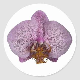 Orchid Flower Classic Round Sticker