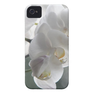 Orchid Flower Faith Love Peace Destiny Gift iPhone 4 Case-Mate Cases