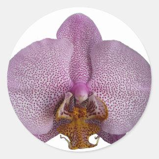 Orchid flower round sticker