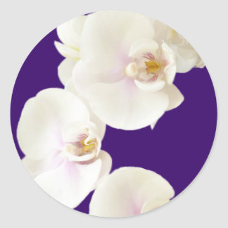 Orchid Flowers Classic Round Sticker
