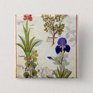 Orchid & Fumitory or Bleeding Heart Hedera & Iris 15 Cm Square Badge