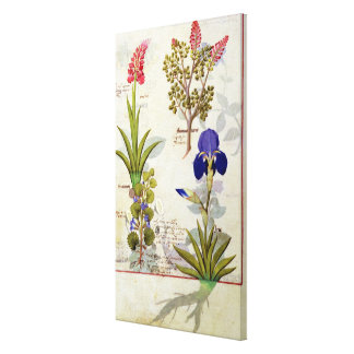 Orchid & Fumitory or Bleeding Heart Hedera & Iris Canvas Print