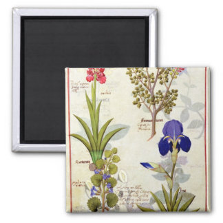 Orchid & Fumitory or Bleeding Heart Hedera & Iris Magnet