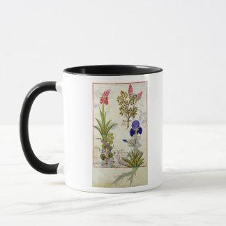 Orchid & Fumitory or Bleeding Heart Hedera & Iris Mug