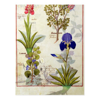 Orchid & Fumitory or Bleeding Heart Hedera & Iris Postcard