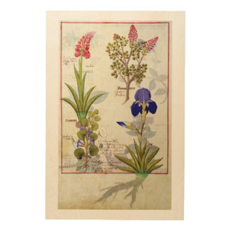 Orchid & Fumitory or Bleeding Heart Hedera & Iris Wood Print