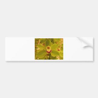 Orchid  Green Cymbidium Bumper Sticker