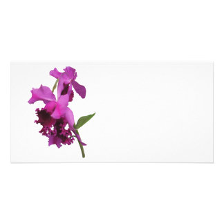 Orchid Harold Carls Picture Card