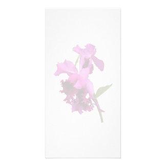 Orchid Harold Carls Photo Greeting Card