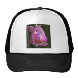 Orchid Hats