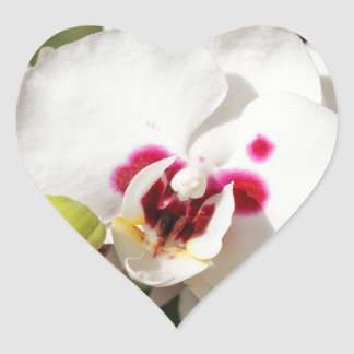 orchid heart sticker