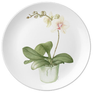 Orchid in a Green Pot Plate
