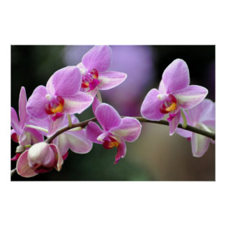 Orchid In A Row Posters