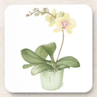 Orchid in Green Pot Botanical Coasters
