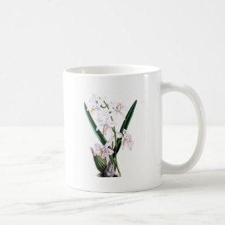 Orchid Laelia Albida, var Rosea Basic White Mug