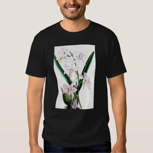 Orchid Laelia Albida, var Rosea T Shirts