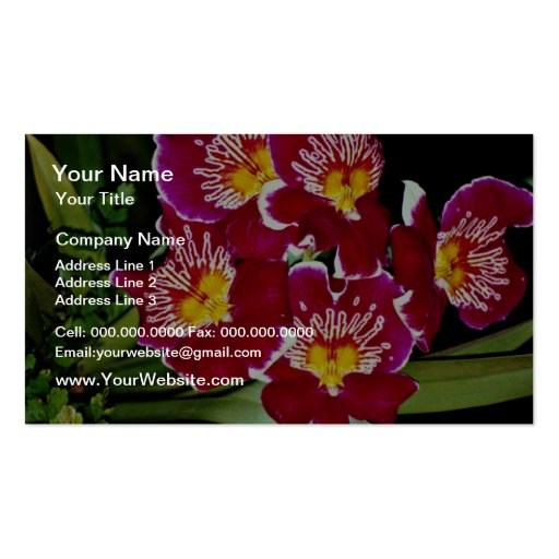 Orchid, miltonia hybrid  flowers business card templates