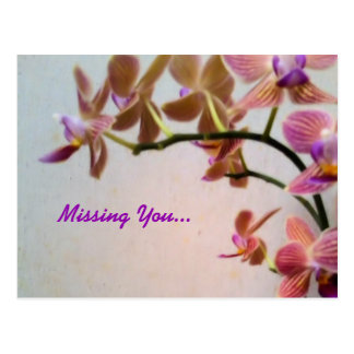 Orchid Missing You Postcard