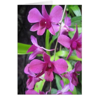 Orchid notecard