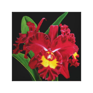 Orchid Oil Painting Stretched Canvas Print
