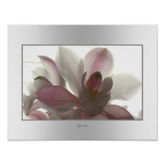 Orchid Pale Beauty Poster