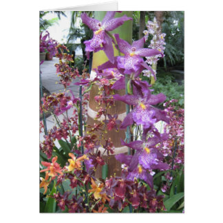 Orchid Path Note Card