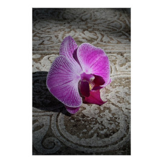 Orchid Phalae Graphic Poster -40x60 -or smaller