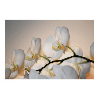 Orchid Phalae Sogo Art Poster -60x40 -or smaller