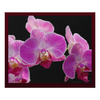 Orchid Phalaenopsis Cluster Print