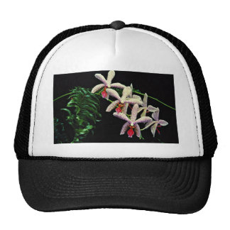 Orchid phalenopsis Vivian flowers Mesh Hat