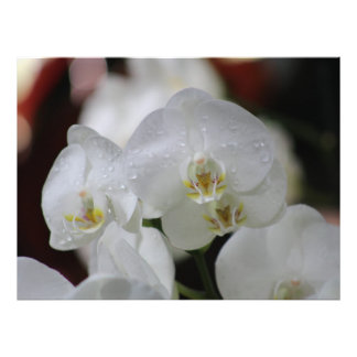 Orchid Photo Print