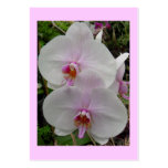Orchid - Pink Blossom (Colossians 2:3)