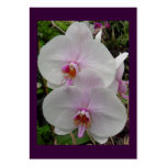 Orchid - Pink Blossom (Colossians 2:3) Pack Of Chubby Business Cards