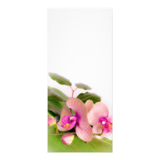 orchid pink full color rack card