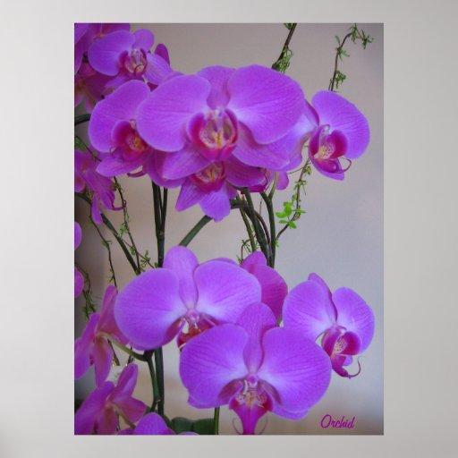 Orchid Plant Print