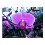 Orchid Post Card