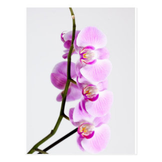 orchid postcard