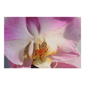 Orchid Poster