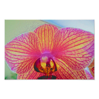 orchid posters