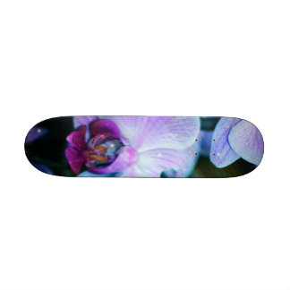 Orchid Skate Boards
