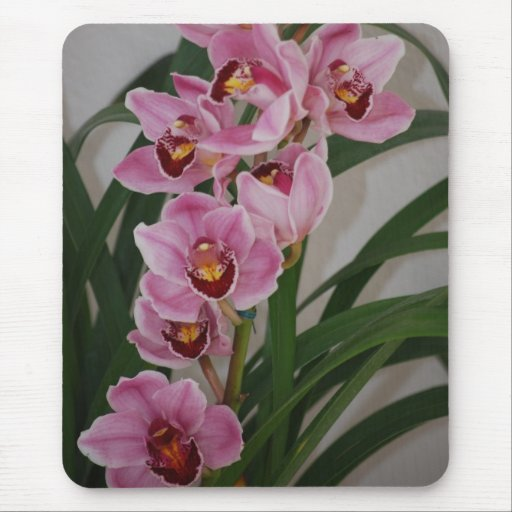 Orchid Spray Mousepad