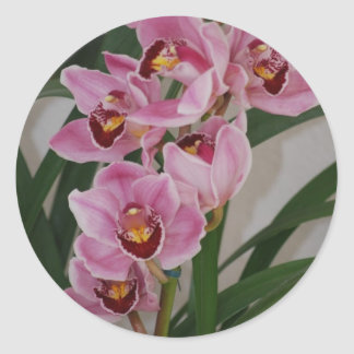 Orchid Spray Stickers