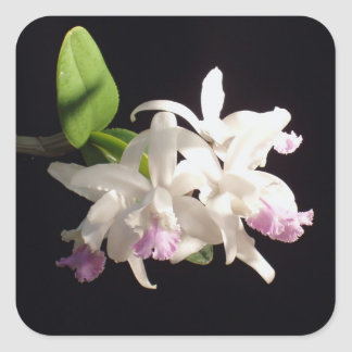 Orchid Square Sticker