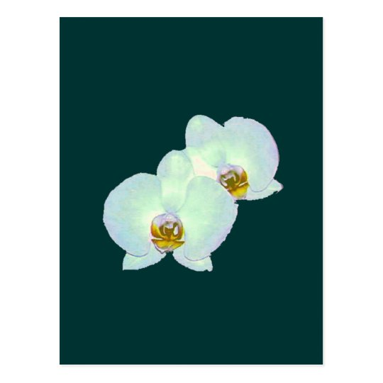 Orchid The MUSEUM Zazzle Gifts Zurich 2000 Postcard
